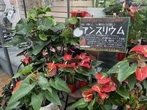 5月【火っ得キャンペーン&水曜花苗バイキング】