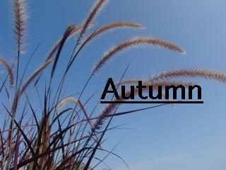 秋 Autum