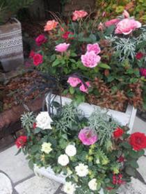 寄せ植え「秋のミニバラ2段ボックス」
