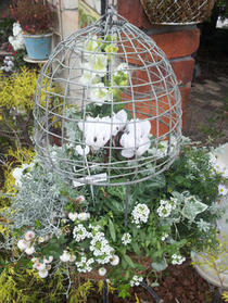 モコモコ白の鳥カゴ寄せ植え