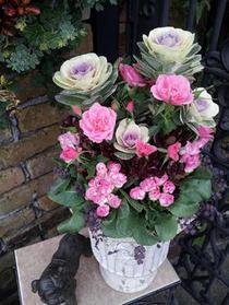 冬の響艶。「バラ」の寄せ植え