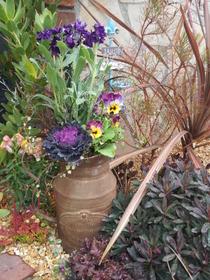 花壇のなかのナチュラル寄せ植え