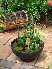 夏を楽しむビオトープ寄せ植え