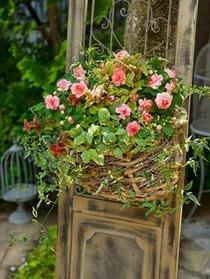 バラ咲きインパチェンスのナチュラル寄せ植え