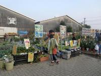 101105_blog_yasai.JPG