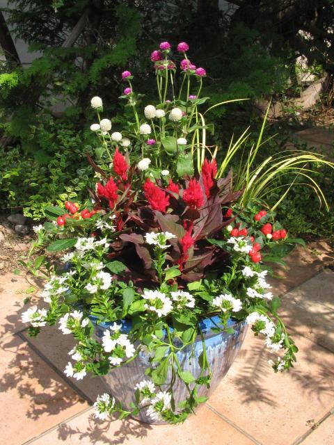 育てやすい花・春の花・夏の花・秋の花・冬の花