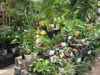 090815_鉢花観葉植物1.JPG
