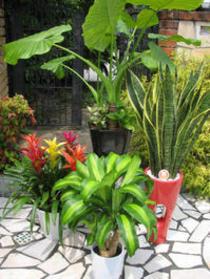 陶器鉢入りの観葉植物