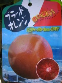 話題の『ブラッドオレンジ』入荷!!