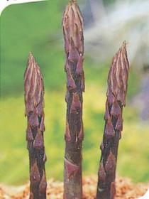 育てて楽しい♪珍野菜 紫アスパラガス