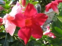 育てて咲かせて感動!『サンパラソル』