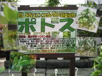 100821_potosu_pop.JPG