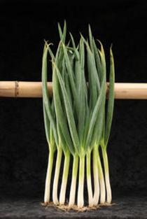 ナーセリーズのオススメ野菜苗