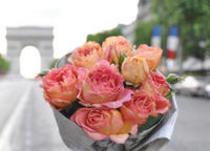 2012春 【Delbard Rose デルバールローズ】