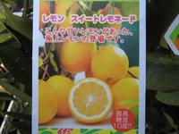 スイートレモン1.JPG