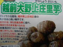 日本一おいしい里芋『越前大野上庄里芋』!!
