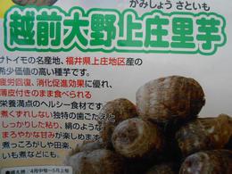 20130313ー里芋1.JPG