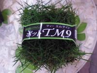 tm92.JPG