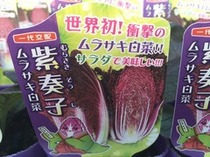 新感覚パープル白菜 『紫奏子』