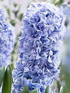 bluetango20150920191500.jpg