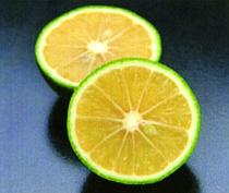 種無しカボス『香美の川』レモン『瀬戸内レモン』