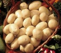春ジャガイモ種芋『チェルシー』