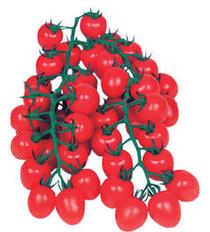 4月おすすめ「ミニトマト『美味っこ』」