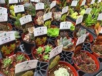 多肉植物~Succulent~2017春♪