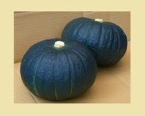 かぼちゃ『特濃こふき』
