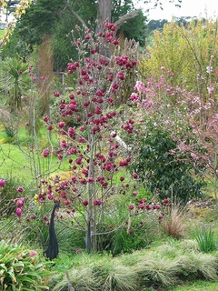 magnoliajenie20180302.jpg