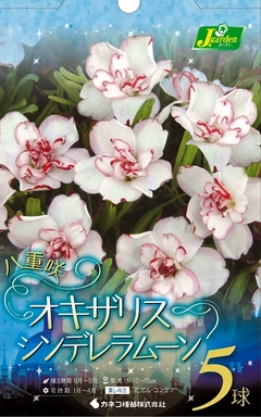 オキザリスシンデレラムーン2018082302.jpg