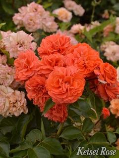 Orangerie201905.jpg