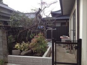 121107_garden_af2.JPG