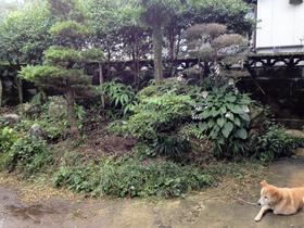 121107_garden_be.JPG